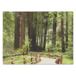 Muir Woods Path I Tissue Paper