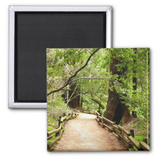 Muir Woods Path II California National Monument 2 Inch Square Magnet