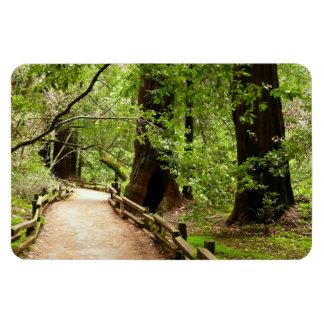 Muir Woods Path II California National Monument Rectangular Photo Magnet