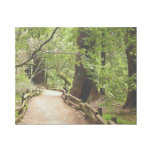 Muir Woods Path II Gallery Wrap