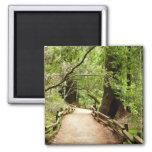 Muir Woods Path II Magnet