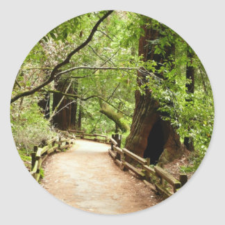 Muir Woods Path II Nature Photography Classic Round Sticker