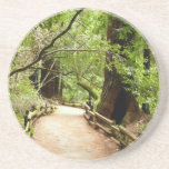 Muir Woods Path II Nature Photography Drink Coaster