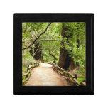 Muir Woods Path II Nature Photography Gift Box