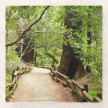 Muir Woods Path II Nature Photography Glass Coaster