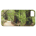 Muir Woods Path II Nature Photography iPhone SE/5/5s Case