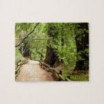 Muir Woods Path II Nature Photography Jigsaw Puzzle