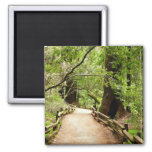 Muir Woods Path II Nature Photography Magnet