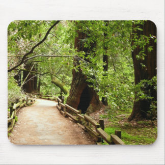 Muir Woods Path II Nature Photography Mouse Pad