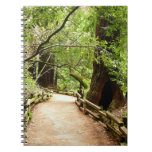 Muir Woods Path II Nature Photography Notebook