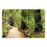 Muir Woods Path II Nature Photography Photo Print