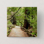 Muir Woods Path II Nature Photography Pinback Button