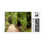 Muir Woods Path II Nature Photography Postage
