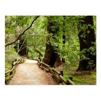 Muir Woods Path II Nature Photography Postcard