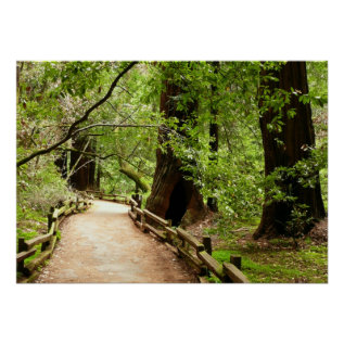 Muir Woods Path Ii Nature Photography Poster at Zazzle