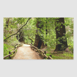 Muir Woods Path II Nature Photography Rectangular Sticker