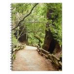 Muir Woods Path II Nature Photography Spiral Notebook