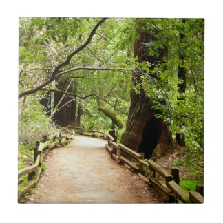 Muir Woods Path II Nature Photography Tile