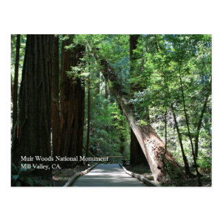 Muir Woods Post Card