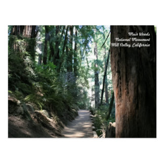 Muir Woods Post Card