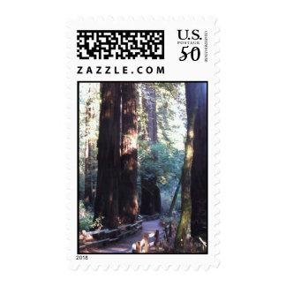 Muir Woods Postage