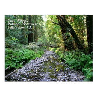 Muir Woods Postcard