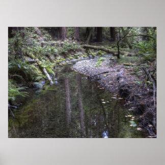 Muir Woods Poster