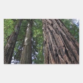 Muir Woods Rectangular Sticker