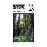 Muir Woods - Redwood Trees Stamp