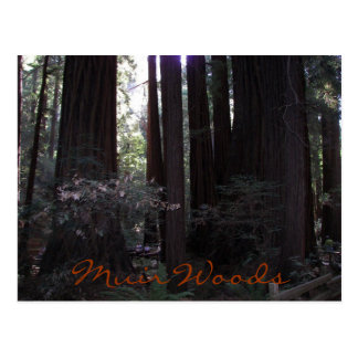 Muir Woods Travel Postcard