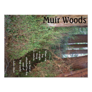 Muir Woods Trees with Quote Poster