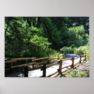 """""""Muir Woods Walk"""" Poster"""