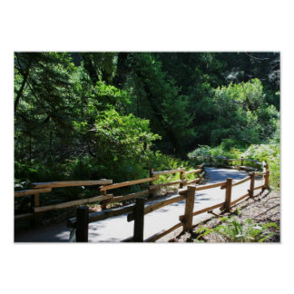 """""""Muir Woods Walk"""" Posters"""