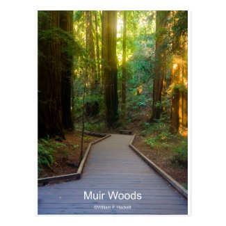 Muir Woods Walkway California Products Postcard