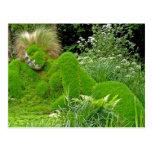 Mujer de la hierba tarjetas postales
