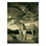 mujer del caballo blanco postal