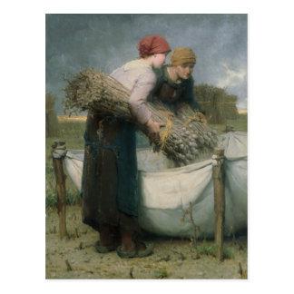 Mujeres en el campo, 1882 postal