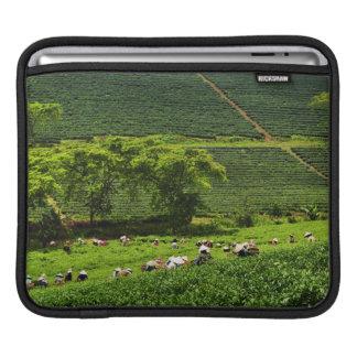 Mujeres que cosechan el té 2 fundas para iPads
