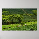 Mujeres que cosechan el té 2 poster