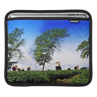 Mujeres que cosechan té manga de iPad
