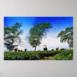 Mujeres que cosechan té poster