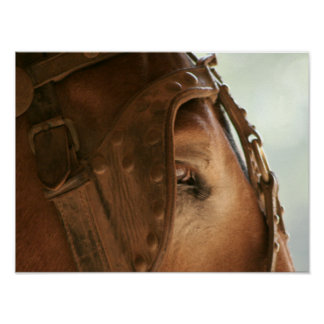 Mula roja - poster del ojo