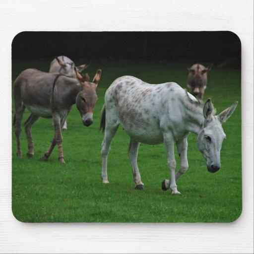 Mulas y burros Mousepad