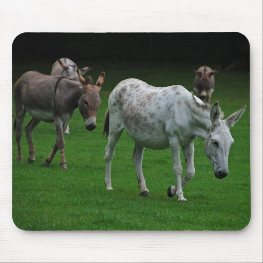 Mulas y burros Mousepad Tapetes De Raton