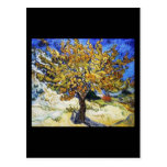 Mulberry Tree Post Cards