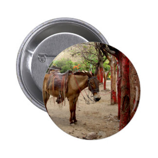 Mule and red poles. pinback button