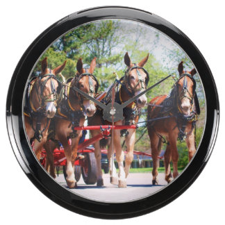 mule day parade aquavista clock