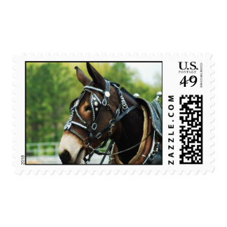 Mule Days Thursday 2010 Columbia TN 624 Postage Stamps