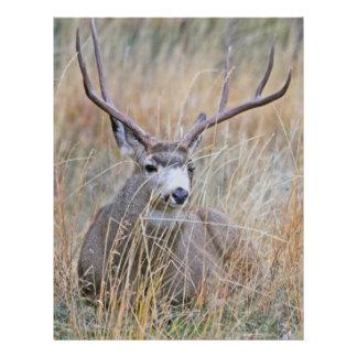 Mule deer 15 letterhead