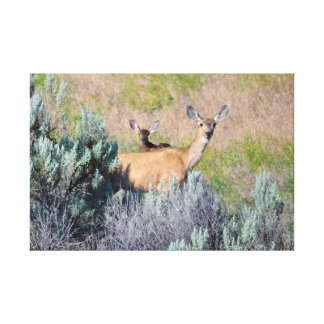 Mule Deer, A Doe and fawn Canvas Prints